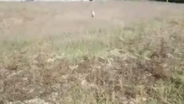 """VIDEO Foligno, sta bene il cane ferito dagli spari: """"Guardate come corre Stitch!"""""""