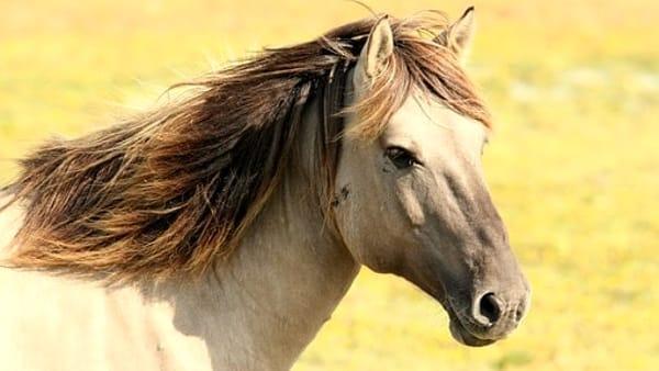 Un bellissimo viaggio a cavallo intorno al Lago Trasimeno, come partecipare