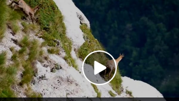 VIDEO Monti Sibillini, le meraviglie della natura: ecco il Camoscio dell'Appennino