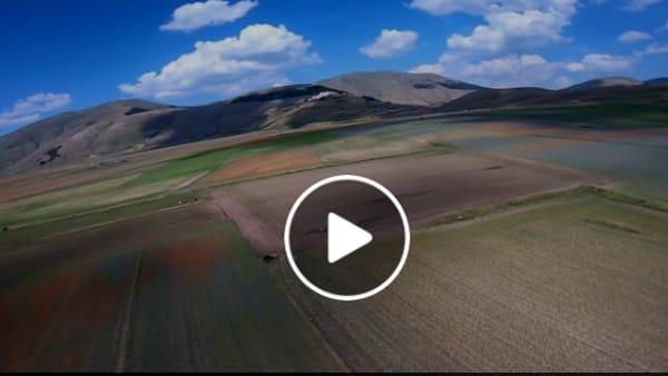 VIDEO Castelluccio, in volo sui colori della fiorita: che spettacolo