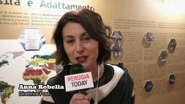 """VIDEO Il Post di Perugia riapre i battenti, inaugurata la prima mostra della nuova """"era"""": le novità"""