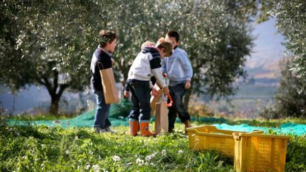 Frantoi Aperti 2019, una lunga festa per l'olio extravergine d'oliva con tante tappe gustose