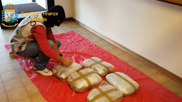 VIDEO Perugia, 150 chili di marijuana sequestrati: stroncato traffico internazionale