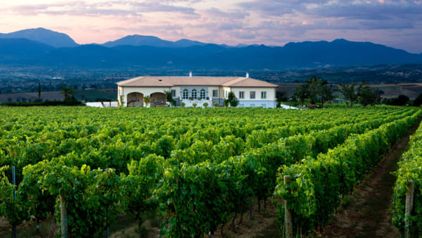 Tra una passeggiata e un brunch a bordo vigna: l'evento giusto per gli amanti del vino