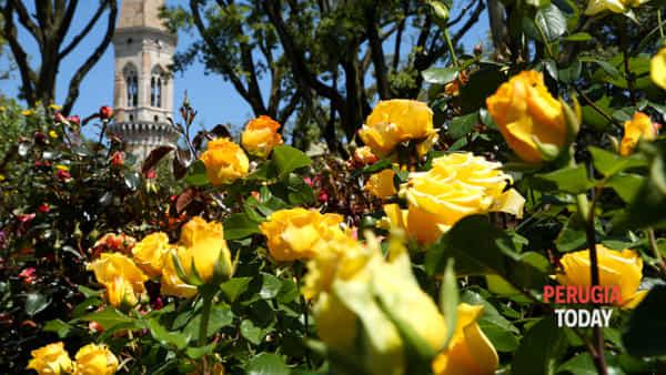 Che magia la natura! Piante rare, fiori profumati e tante curiosità: torna Perugia Flower Show