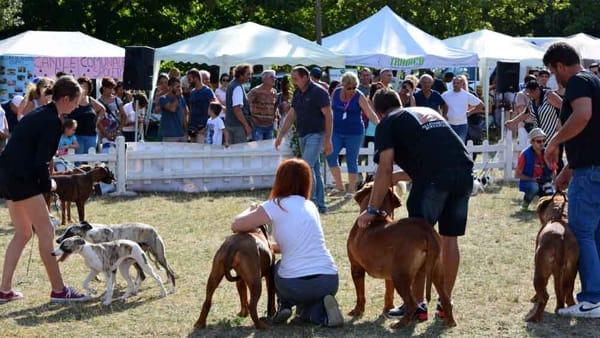 Numeri record per l'Esposizione Nazionale Canina Città di Spoleto: i vincitori