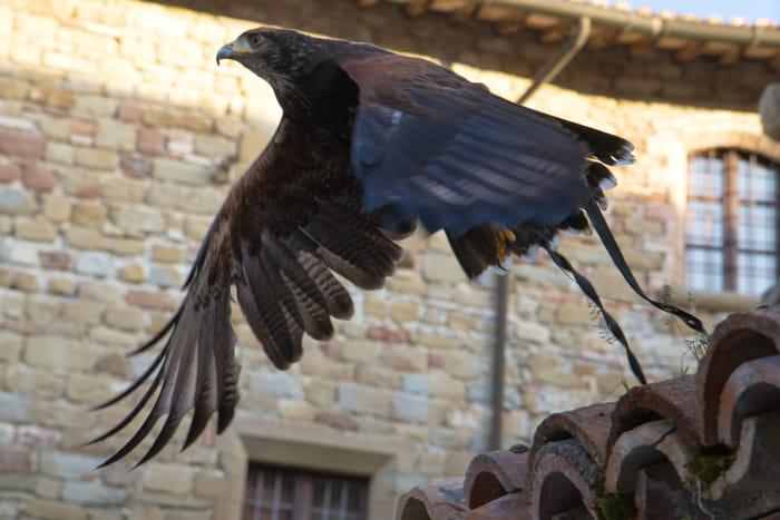 Castello di Petroia - Falconeria (3)